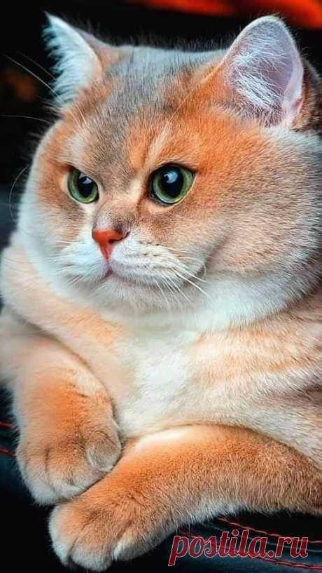 Без Кота И Жизнь Не Та   Группы   Facebook