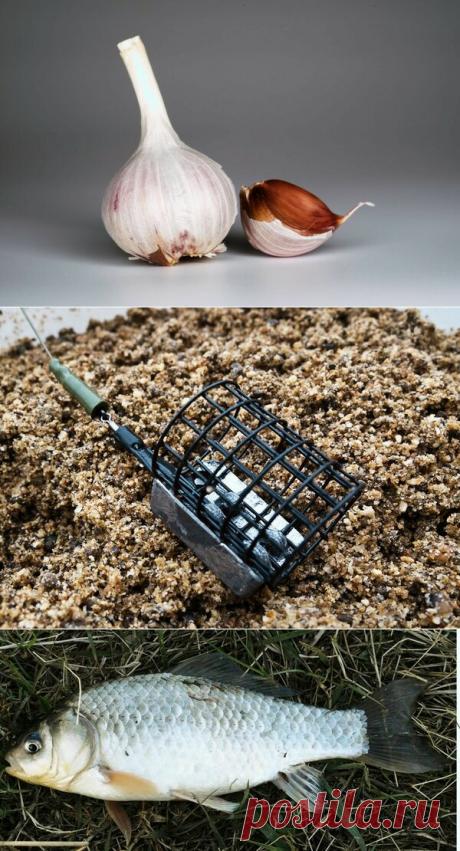 Реакция карася на чеснок | Рыбалка-мое хобби. | Яндекс Дзен