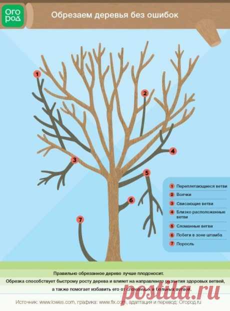 Обрезка деревьев и кустарников – советы и рекомендации   Уход за садом (Огород.ru)