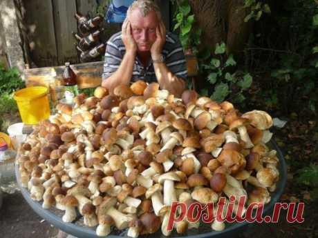 Мечта любого грибника... Не правда ли ? ))