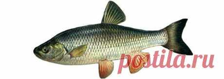 Алфавитный каталог рыб - описание рыб » Сад огород