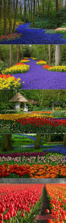 Кёкенхоф - всемирно известный королевский парк цветов в Нидерландах. Также известен под названием Сад Европы - ЖУРНАЛ СО ВКУСОМ