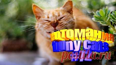 коты смешные видео, видео смешных котов, видео котов смешное, кот видео смешное, видео кот том, приколы коты видео, видео кот, кот видео, видео о котах, смешные животные видео, видео животных смешные, смешное животное, смешное видео животных, животные смешное, приколы коты, прикол с котами, кота приколы, смешные кошки, кошки смешное видео, кошка смешная, смешное кошки, смешных кошек, кошек смешных, кошка смешная видео, про смешно кошек, кошки и смешные, видео про кошек, кошка видео, смешной кот