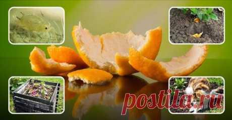 Апельсиновые корки – польза для сада и огорода, особенности применения на даче - Образованная Сова