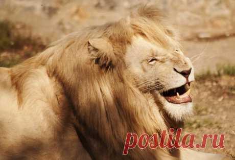 37 fotografías de los animales felices, que le harán sonreír