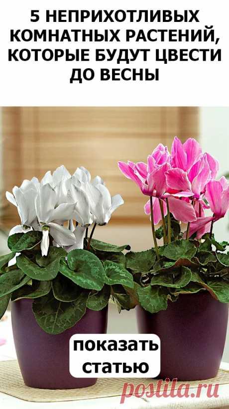 5 растений