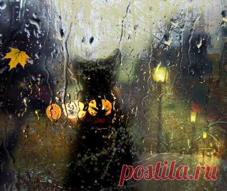 Картинки Осенний дождь (36 фото) ⭐ Забавник