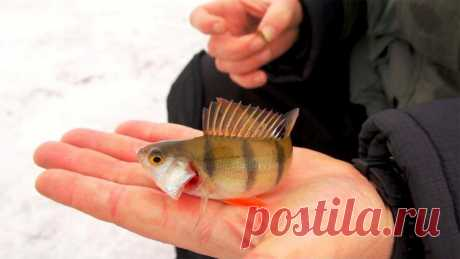 Универсальная мормышка, с которой поймать рыбу сможет даже новичок. | Рыболовные фишки | Яндекс Дзен