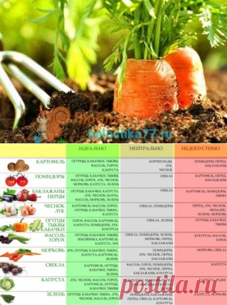 После чего сажать морковь в открытом грунте. Что сажать после моркови на следующий год?