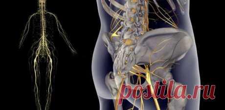 Простые упражнения при защемлении седалищного нерва Упражнения при защемлении седалищного нерва Седалищный нерв свое начало берет в поясничном отделе позвоночника и, проходя через ягодицы, тянется к ступне. Поэтому боль при его защемлении чувствуется о…