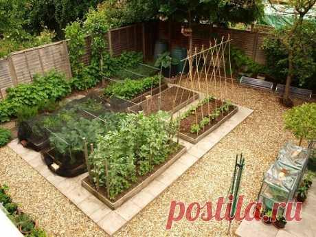 С чего начать огород | Сад и Огород | Яндекс Дзен