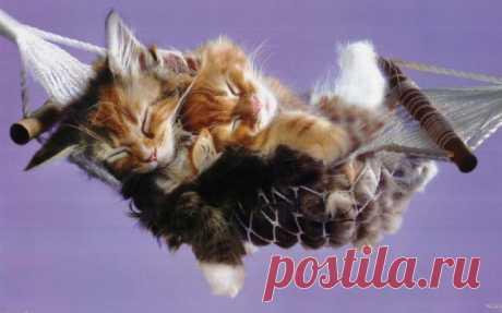 14 modos, como los gatos muestran a usted el amor