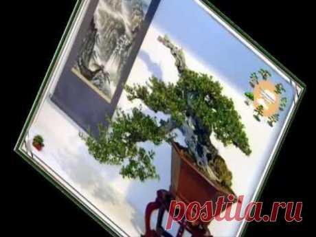 Bonsai 60 образов бонсай в стиле Кенгай (Kengai)