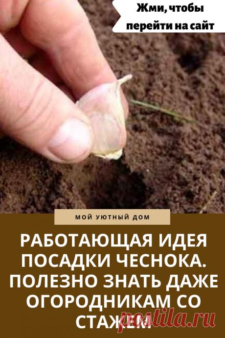 Интересная идея как посадить чеснок