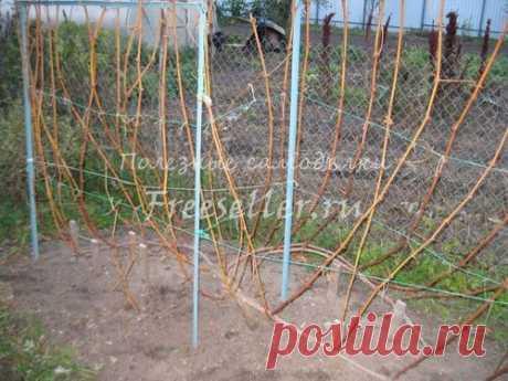 Подготовка куста винограда к зимовке » Полезные самоделки - своими руками.