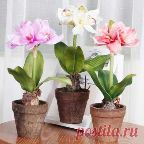 ВСЕ по ТЕМІ: Маленькая хитрость: чтобы цветы в доме цвели пышно и долго!