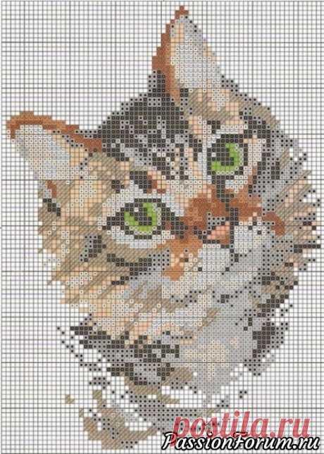 Котик - запись пользователя Натали-Анри в сообществе Вышивка в категории Схемы вышивки крестом, вышивка крестиком