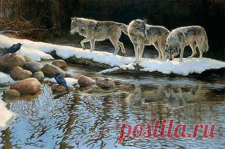 Wolves | WOLVES