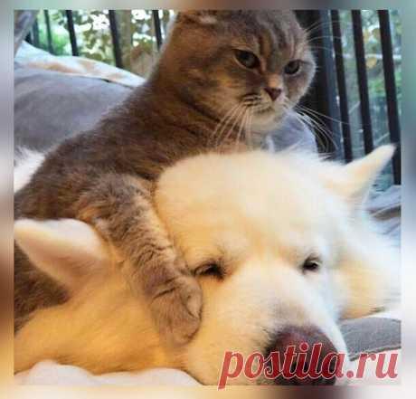 10 фото-доказательств тому, что коты могут дать жёсткий отпор собакам | Животный Мир | Яндекс Дзен