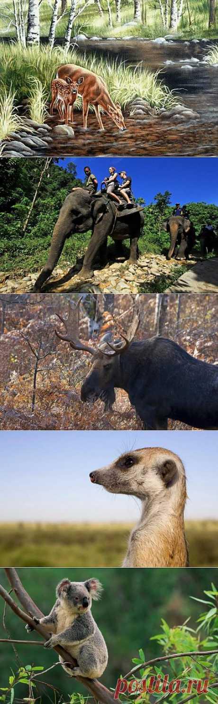 (+1) тема - В мире животных | НАУКА И ЖИЗНЬ