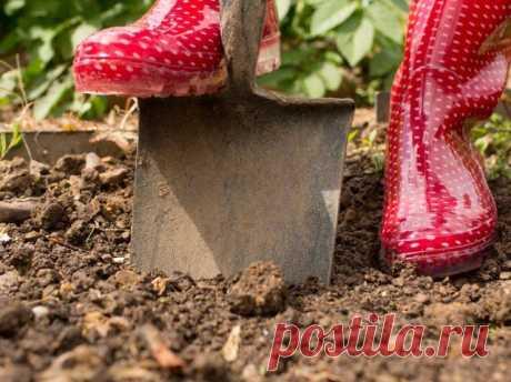 9 ways to return to the soil fertility