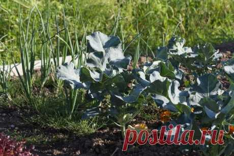 7 растений против тли