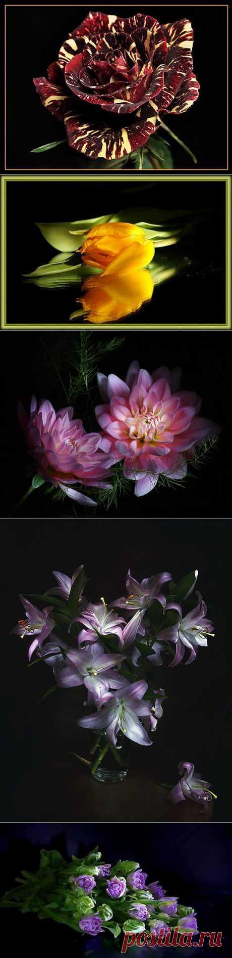 На лепестках цветов написано посланье Такою тонкою изысканною вязью. Читаю текст и слов благоуханье Мне сердце оплетает светлой бязью......