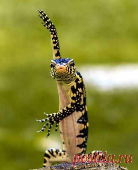 Вот такого роста и все на меня!! Чес слово. ( Рептилия была замечена в парке в городе Сурабая, Индонезия.)