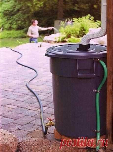 Сделай специальную бочку для сбора дождевой воды и используй ее для полива растений.