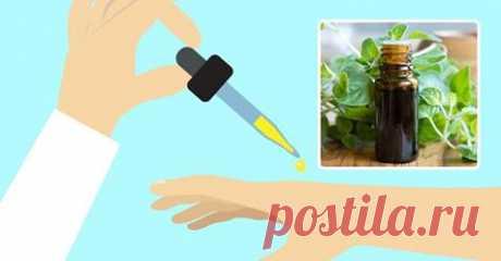 Преимущества масла орегано значительно превосходят рецептурные антибиотики - Полезные советы красоты