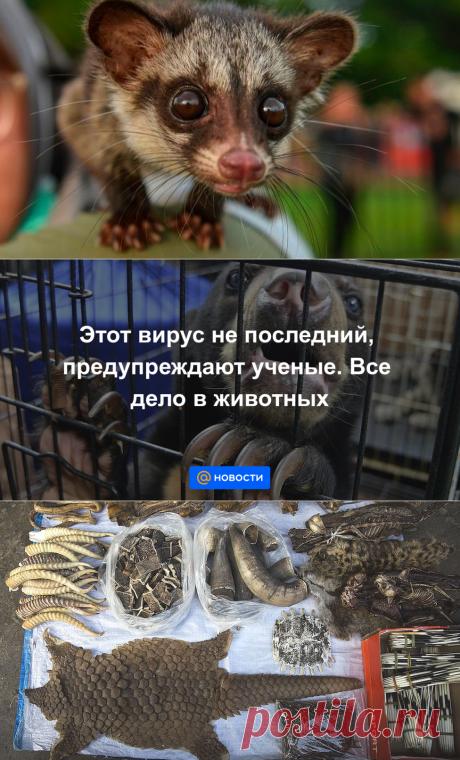 Этот вирус не последний, предупреждают ученые. Все дело в животных - Новости Mail.ru