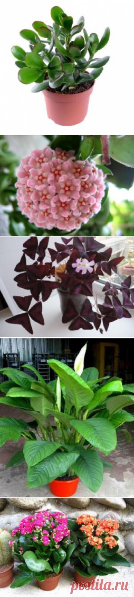 Комнатные растения неприхотливые