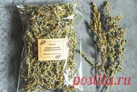 Полынь горькая - лечебные свойства, противопоказания и применение.