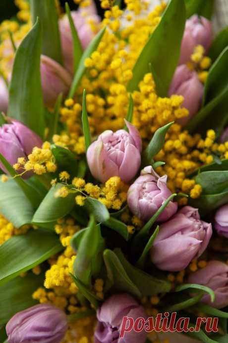 Милые девочки, девушки, женщины!    В этот день 8 Марта, я желаю Вам добра,         и цветов охапку, и весеннего тепла!                     С добрым праздничным утром! ----------------------------------------------------