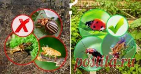 Полезные и вредные жуки в огороде – фото, описания и что с ними делать В борьбе за урожай на огородном участке кроме вас незримо, но ежедневно участвуют многочисленные мелкие, но очень важные существа – полезные и вредные жуки, клещи, бабочки, пауки, клопы, тли и прочие. Одним словом – разнообразные членистоногие.