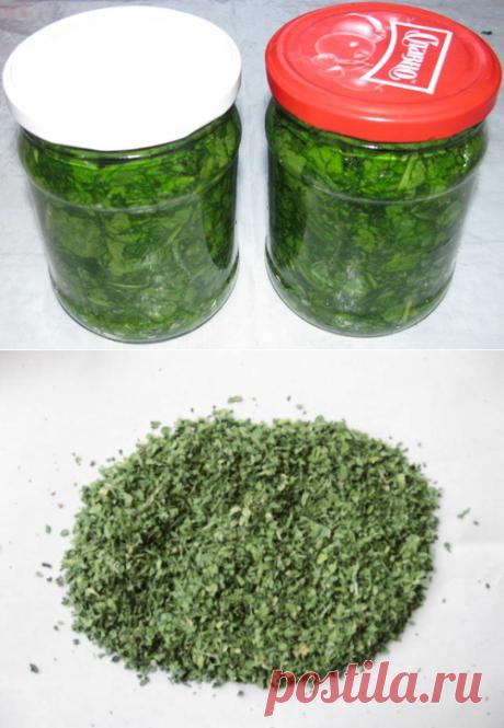 Как сохранить зеленый лук / Огород / Мои дачи