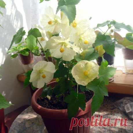 Какие цветы нужны для счастья разным Знакам Зодиака! » Женский Мир