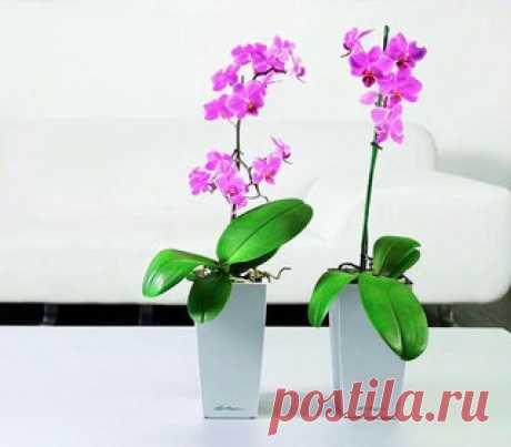 Орхидеи и другие цветы в вопросах и ответах   ВКонтакте