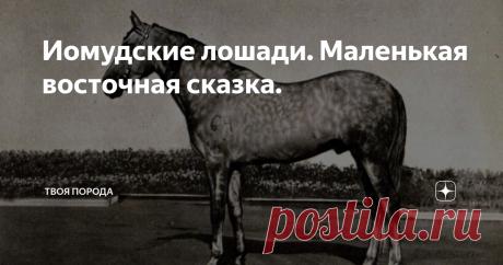 """Иомудские лошади. Маленькая восточная сказка. Сегодня предлагаю взглянуть на """"кузенов"""" великолепных ахалтекинцев."""