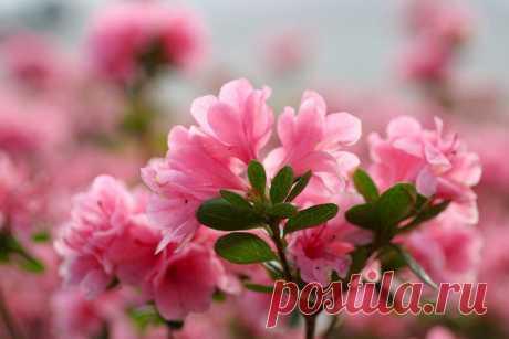 Цветы на деревьях и на воде