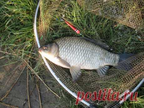 Как ловить карася на поплавочную снасть: полезные рекомендации   Все о ловле рыбы - Рыбалке.нет