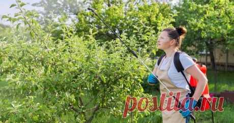 Чем обработать яблоню, грушу и сливу в июле против болезней и вредителей. Как же защитить плодовые деревья?