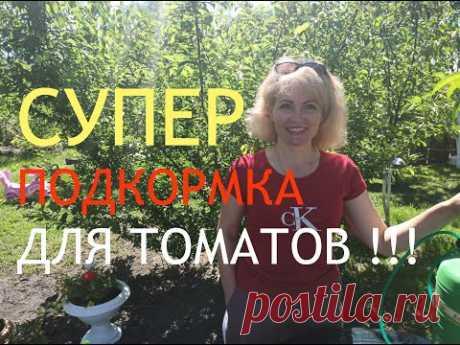 ТОМАТЫ. Подкормка томатов. Чем подкормить помидоры. Как вырастить богатый урожай помидор