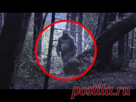 5 Terrifying BIGFOOT Sightings Caught on Camera - YouTube