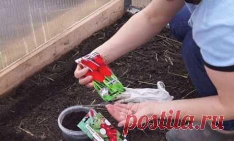 Правильная посадка редиса в теплицу из поликарбоната: когда сажать, выращивание и уход Весной, среди других огородных работ, наступает время и для посадки редиса. Это скороспелый быстрорастущий овощ с коротким сроком созревания, поэтому некоторые овощеводы выращивают его в теплицах, что...