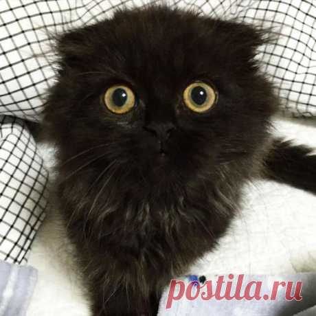 Get acquainted: Gimo is a cat with the biggest eyes!
