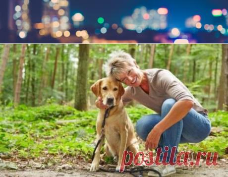 Собаки продлевают жизнь своим хозяевам | Pravdoiskatel