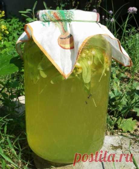 Ароматный липовый лимонад — вкусный и очень-очень полезный. В жару — лучше не придумаешь!