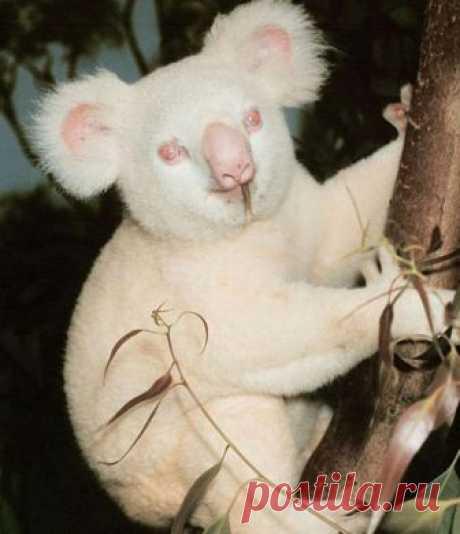 Животные альбиносы, которым не нужен цвет, чтобы выглядеть клево