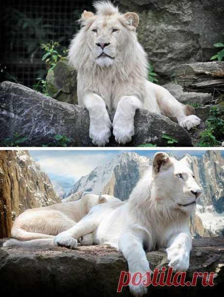 Красота, созданная природой. Самые красивые животные планеты